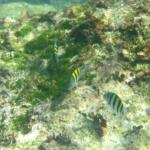 Snorkeling at Yal Ku