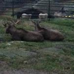 chillin with the Elks