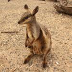 Foto de Heavitree Gap Outback Resort