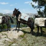 Pack Mules at our destination