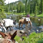 Horseback Riding along Russell Creek