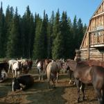 Horse Corral and Barn