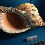 Shell collection - Pacific Ocean