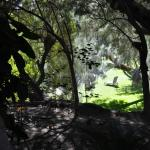 2bunchpalms garden