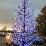 Lit up tree in car park