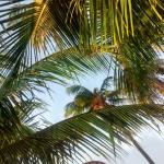 Look up when you're lying on the hammock :)