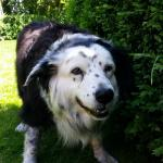 Macy the friendly dog - entertaining and great with the kids