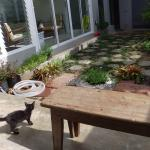 A local ill kitten looked after by hotel staff. Foyer area.