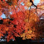 東門の紅葉