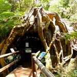 Entrance to the Glow Worm Cave