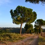 Foto di Agriturismo Le Mandriacce