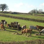 Feeding time for the cows in November
