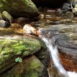 Tranh Stream