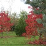 Reds of Autumn