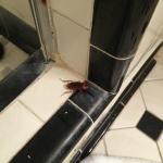 Roach in shower