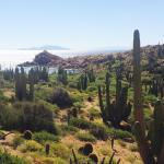 Isla Catalana is home to the world's largest and tallest barrel cacti