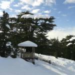 Tannourine Cedar Forest Nature Reserve