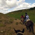 Cavalos ao vento
