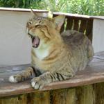 Местный кот, не забывайте покормить!