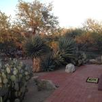 Grounds filled with great desert vegetation!