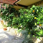 Lush Courtyard Area