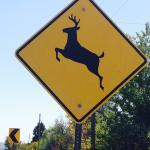 Elk to be spotted  on nearby walks