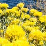 Local flora - surrounding Loveland area