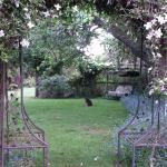 Pademelons in the garden