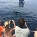 Dolphin Safai & Snorkel