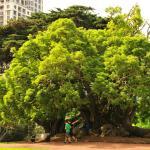 Буйство зелени