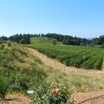 El Dorado Wine Region Vineyard