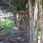 Birds in Jerry's courtyard