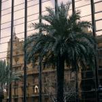 Foto de Barcelonina