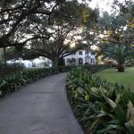 Beautiful live oaks and manicured lawns.
