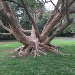Foto de National Botanical Gardens