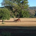 Horses live and graze on the property