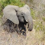 Several elephants crossed the road in front of our vehicle