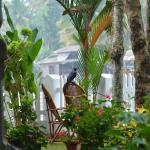 Crow menace