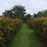 Inside the Maze Garden