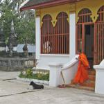 A monk and a temple dog