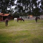 Horses on grounds