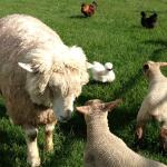Dusky Ridges Farm Stay