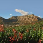 Table Mountain is one of the New 7 Wonders of Nature and a must-visit