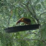 Pássaros exóticos vem tomar café da manhã com os hóspedes