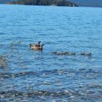 En el Lago....