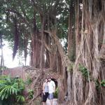 Amazing old trees!