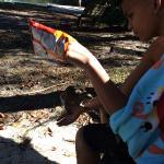 Squirrels have no fear-