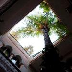 Il cortile con la Palma