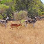 Foto de Mziki Safari Lodge