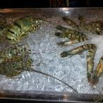 Lobster ready to be coocked